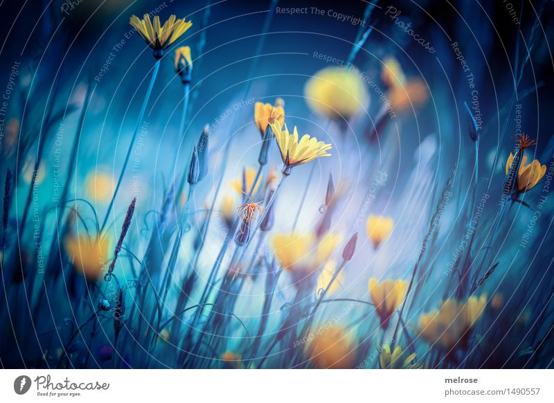 Nature City Blue Colour Flower Landscape Black Cold Yellow Blossom Autumn Style Moody Design Dream Field