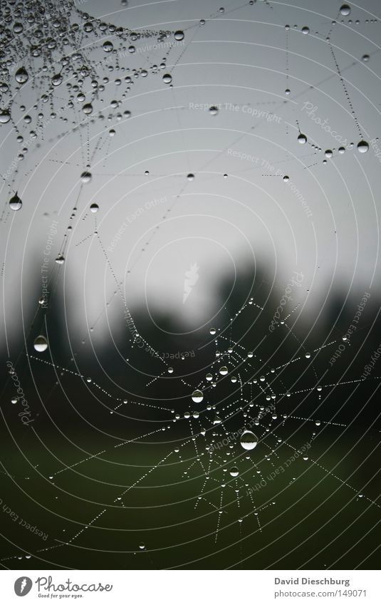 drip mechanism Spider Spider's web String Captured Rain Fog Weather Meteorology Drops of water Water Morning Dew Ambush Trap Stick Adhesive Insect Meadow Sky