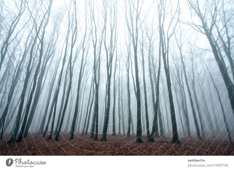 beech forest Forest Tall Hunting Blind Beech tree Beech wood Nature Landscape Tree Tree trunk Branch Twig Winter Autumn Fog Haze Copy Space Deserted Sky Bright