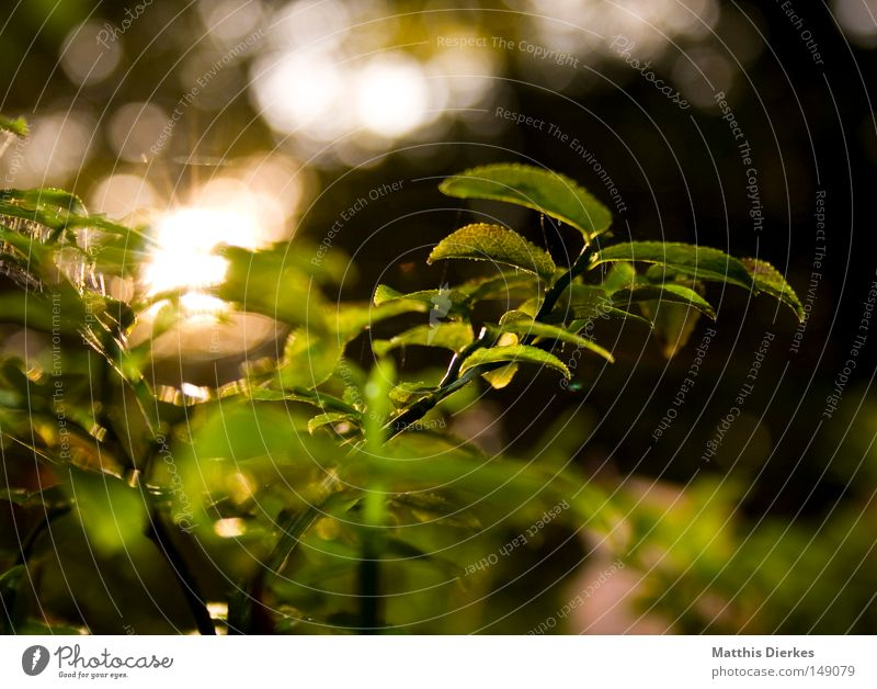 Nature Water Green Plant Sun Flower Autumn Lighting Glittering Bushes Point Dew Botany Autumnal Point of light Woodground