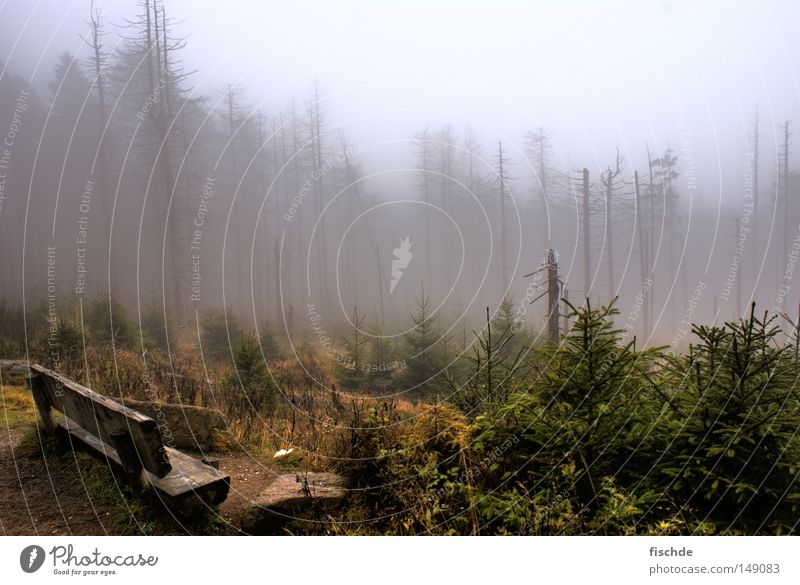 Dark prospects Forest Leaf Fog Cold Break Hiking Tree Coniferous forest Spruce Vantage point Hill Footwear Hiking boots Wood Nature Mountaineering Bench