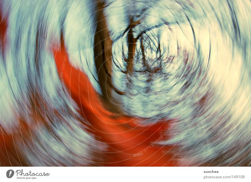 in the whirlpool of seasons Forest Tree Tree trunk Branch Sky Autumn Holiday season Winter Abstract Nature Landscape Undergrowth Air Red Leaf Blur Dream Rotated