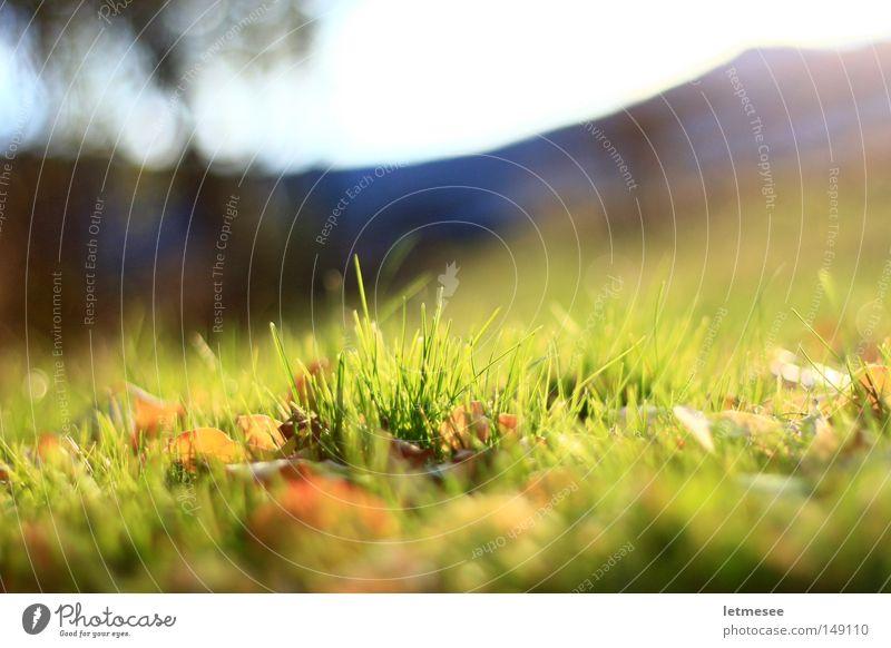 Sun Green Leaf Meadow Grass Mountain Garden Park Fresh Garden fence Large aperture