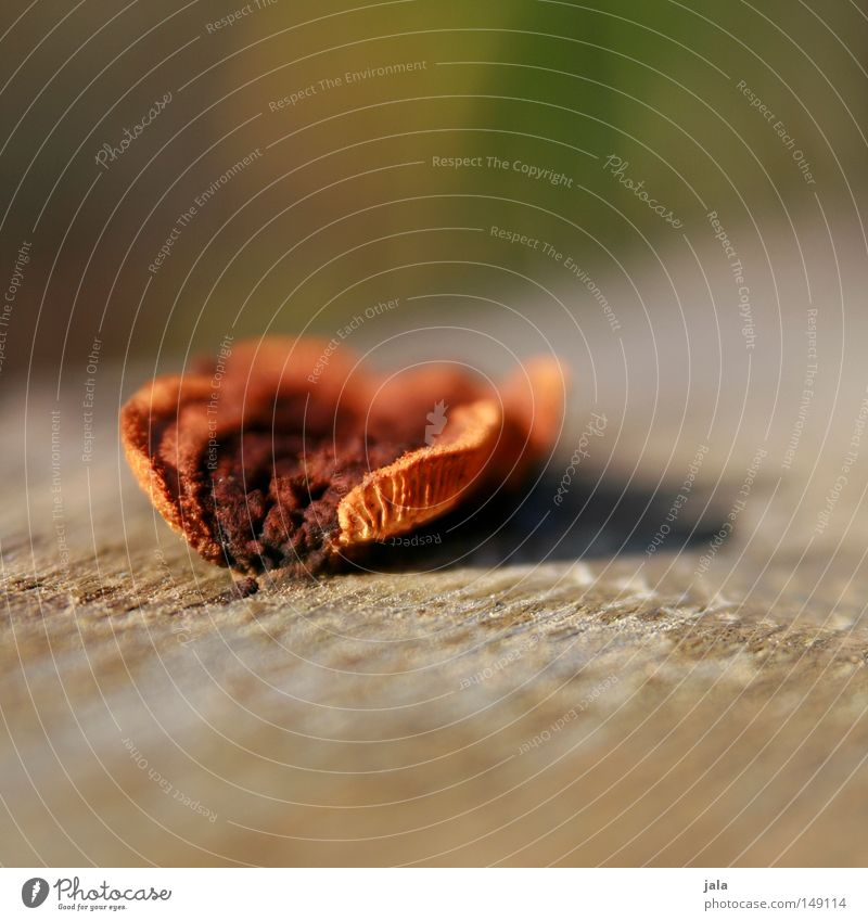 Nature Wood Brown Orange Mushroom Depth of field