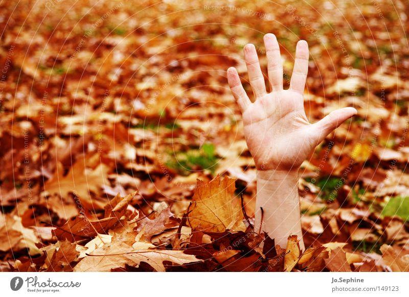 automne et les morts-vivants by hand Autumn Wave Gesture Hide Autumn leaves high five Exceptional Whimsical Fingers 5 Copy Space left Colour photo Exterior shot