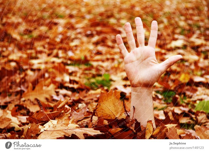 Hand Autumn Exceptional Arm Fear Fingers Creepy Hide Whimsical Autumn leaves Gesture Panic Wave Hiding place Frightening Undead
