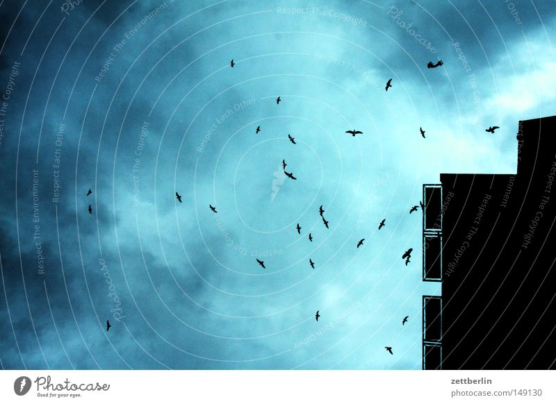 birds Evening Twilight Sky Bird Clouds House (Residential Structure) Low pressure zone Autumn Gale Autumn storm Flock of birds Sleeping place Search Flying