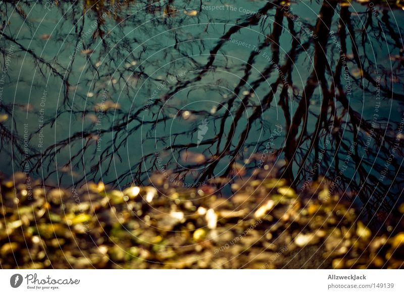 Water Tree Leaf Yellow Autumn Grief Transience Distress Puddle Rainwater Branchage