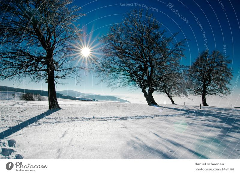 new christmas card 11 Sunset Winter Snow Black Forest White Deep snow Hiking Leisure and hobbies Vacation & Travel Background picture Tree Snowscape Nature Blue
