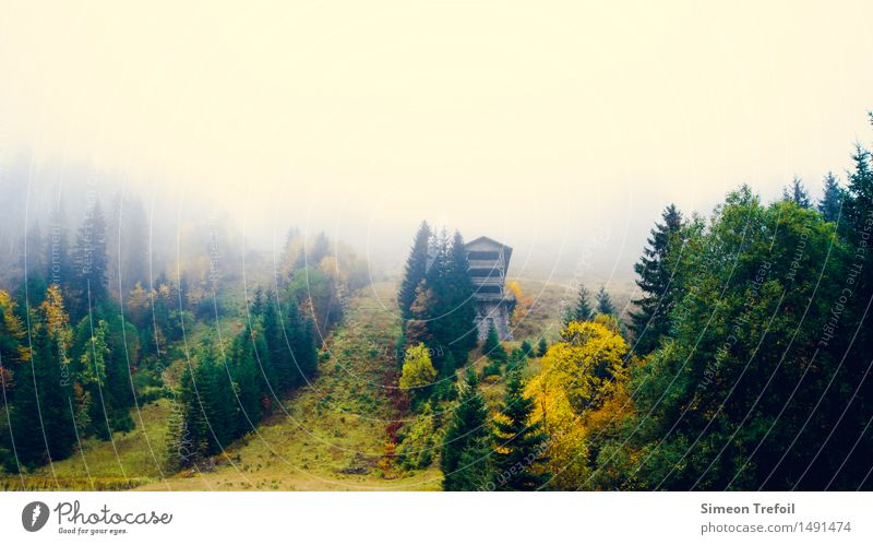 Nature Vacation & Travel Old Green Tree Landscape Loneliness Dark Forest Mountain Cold Yellow Autumn Grass Time Freedom