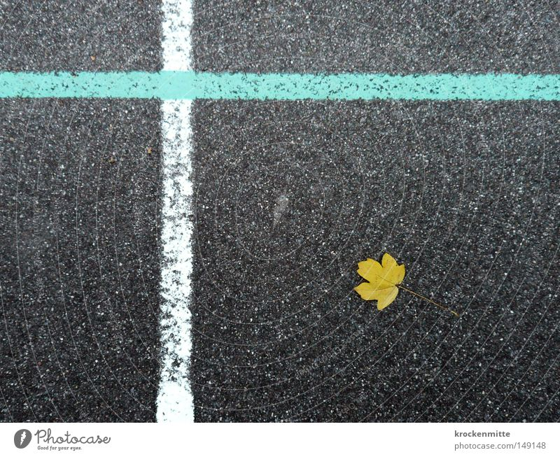 nature morte Leaf Yellow Autumn Lie Line White Light blue Asphalt Ground Crucifix Christian cross Cross Nature Seasons Autumnal Playing field Playground