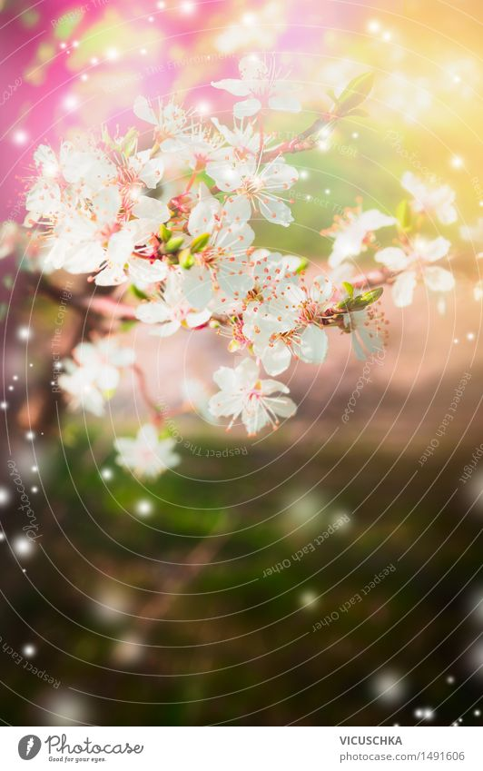 Nature Plant Summer Tree Life Blossom Spring Background picture Lifestyle Garden Pink Design Park Beautiful weather Soft Bud