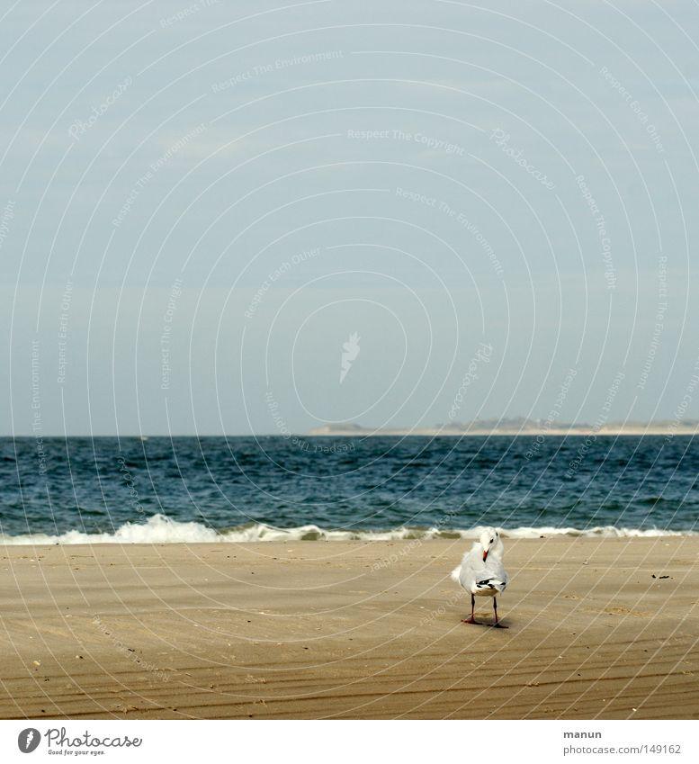 Sky Blue Water White Summer Ocean Beach Calm Relaxation Yellow Autumn Coast Sand Air Bird Brown
