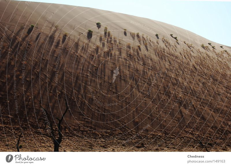 Sky Tree Blue Warmth Sand Brown Earth Stairs Africa Desert Physics Hot Dune Namibia Shadow Acacia