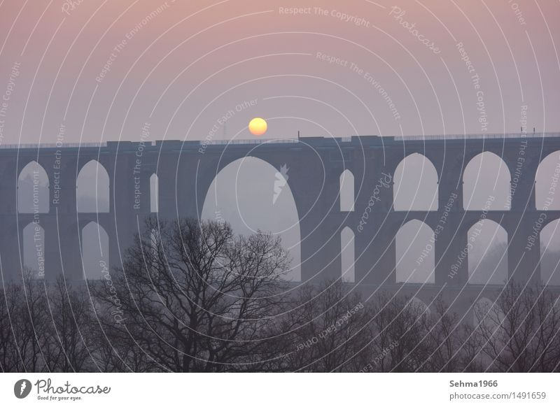 Bridge in the fog with the sun in the archway Environment Nature Landscape Plant Cloudless sky Sunrise Sunset Sunlight Spring Beautiful weather Tree Meadow