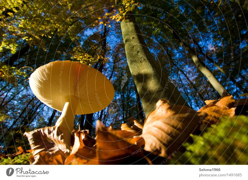 mushroom from below, surrounded by autumn forest Environment Nature Landscape Animal Cloudless sky Autumn Beautiful weather Plant Tree Grass Bushes Moss Meadow