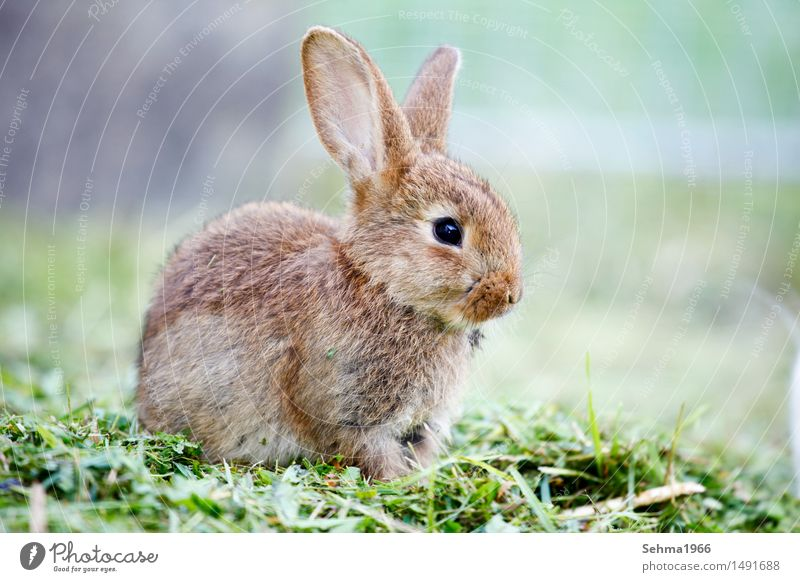 Nature Plant Animal Baby animal Environment Spring Meadow Grass Garden Bushes Soft Protection Curiosity Pelt Pet Hare & Rabbit & Bunny