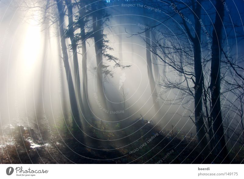 Nature Tree Blue Calm Black Forest Dark Cold Autumn Gray Landscape Fog Gloomy Creepy Damp Climate