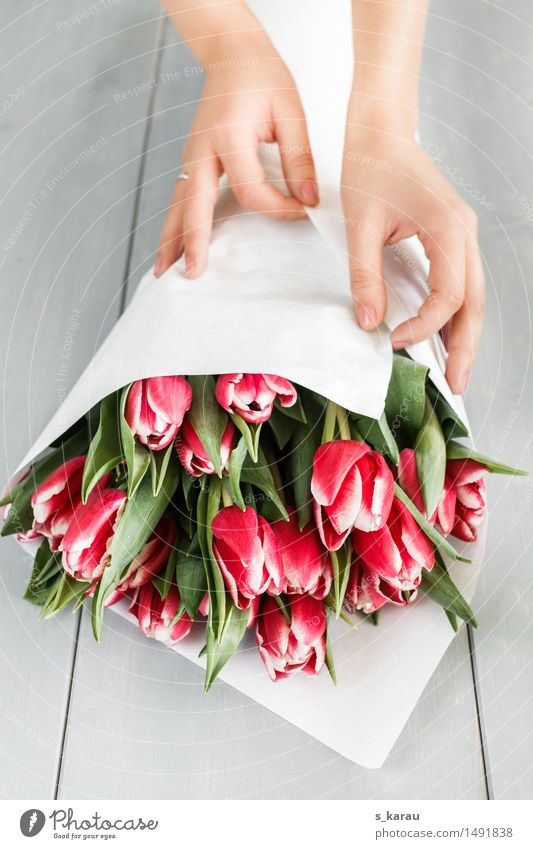 tulip bouquet Feasts & Celebrations Valentine's Day Mother's Day Birthday Feminine Hand Flower Tulip Work and employment To hold on Friendliness Happiness Fresh