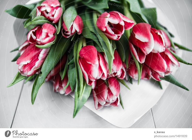 Bouquet of flowers with tulips Plant Flower Tulip Fragrance Happiness Fresh Pink Sympathy Infatuation Romance Friendship Spring April Seasons Blossom Bundle