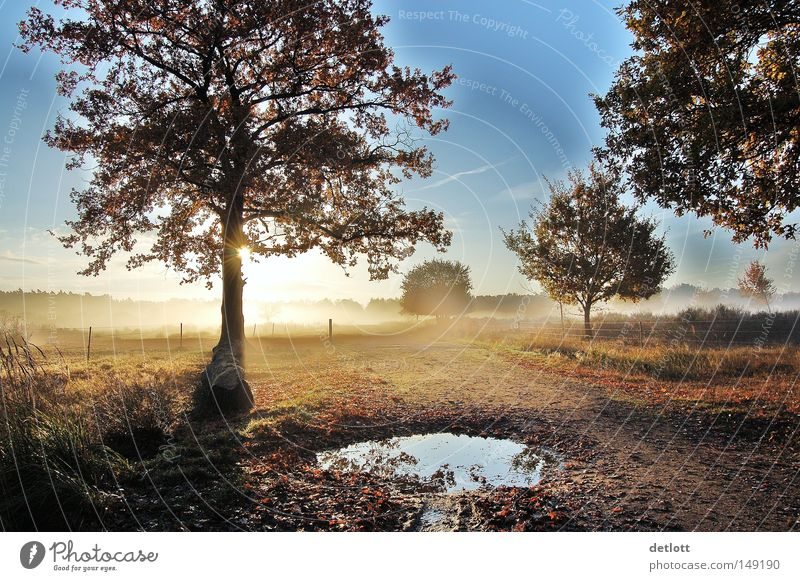Early awakening Nature Heathland Tree Sun Sky Sunrise Puddle Hiking Fog Autumn October November To go for a walk Derelict Far-off places Blue Morning