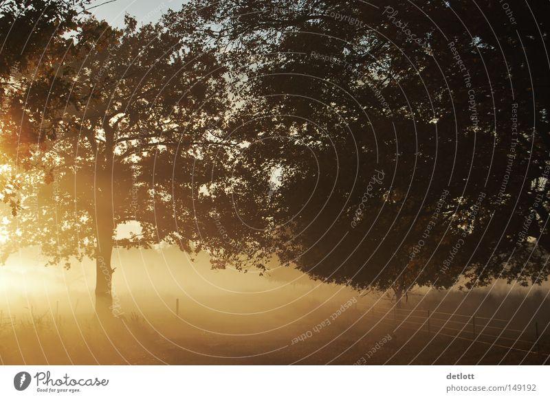 Nature Tree Sun Autumn Lighting Fog Sunrise Gold November October Celestial bodies and the universe Heathland