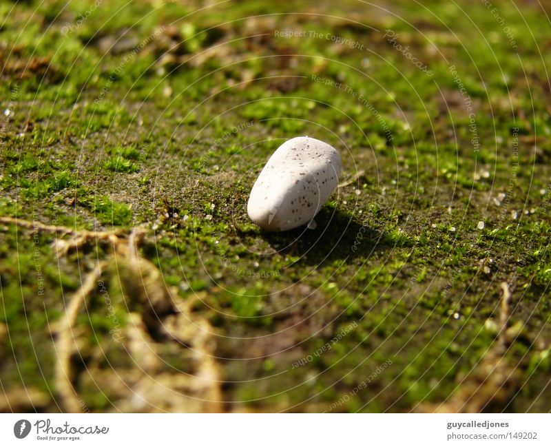 stone Summer Environment Nature Spring Beautiful weather Plant Moss Stone Stone floor White Bright Round Deserted Colour photo 1 Exterior shot Close-up