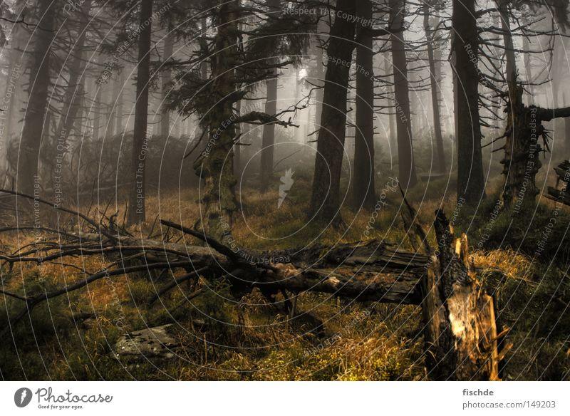 Nature Tree Leaf Forest Dark Cold Mountain Wood Lanes & trails Footwear Hiking Fog Trip Break Vantage point Climbing