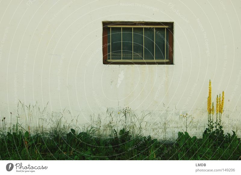 Nature White Flower Colour Loneliness House (Residential Structure) Yellow Window Wall (building) Grass Wall (barrier) Dirty Poverty Painting (action, work) Derelict Farm