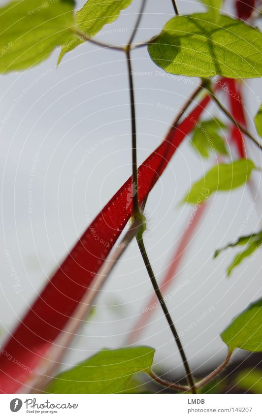 Sky Green Plant Red Leaf Happy Success Growth Future Climbing Delicate String Symbols and metaphors Easy Upward Go up