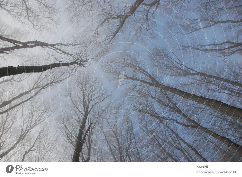 Sky Tree Blue Forest Cold Autumn Above Fog Worm's-eye view Christian cross Under Crucifix Upward Mystic Magic Bleak