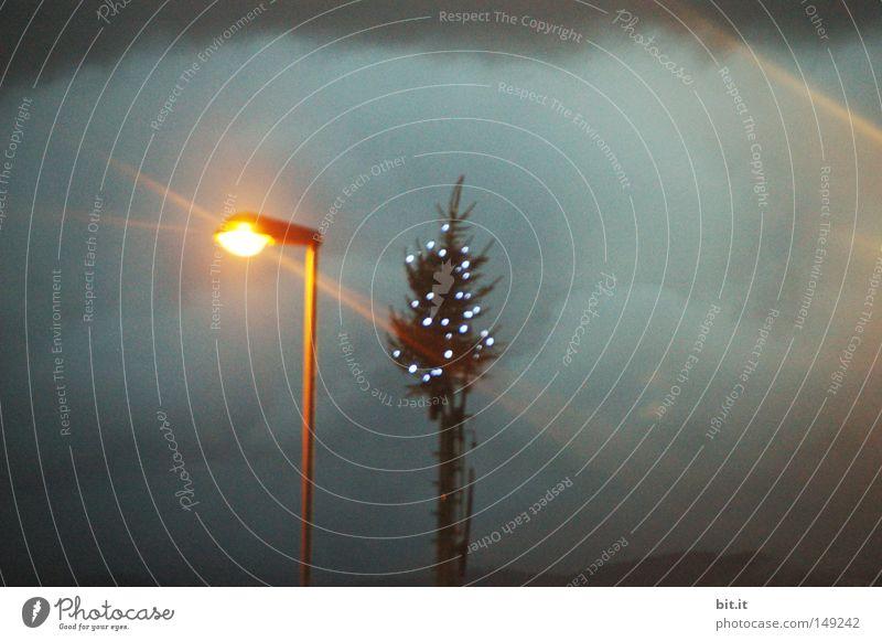 Sky Christmas & Advent Blue Clouds Winter Dark Sadness Lamp Bright Glittering Climate Christmas tree Lantern Storm Fir tree