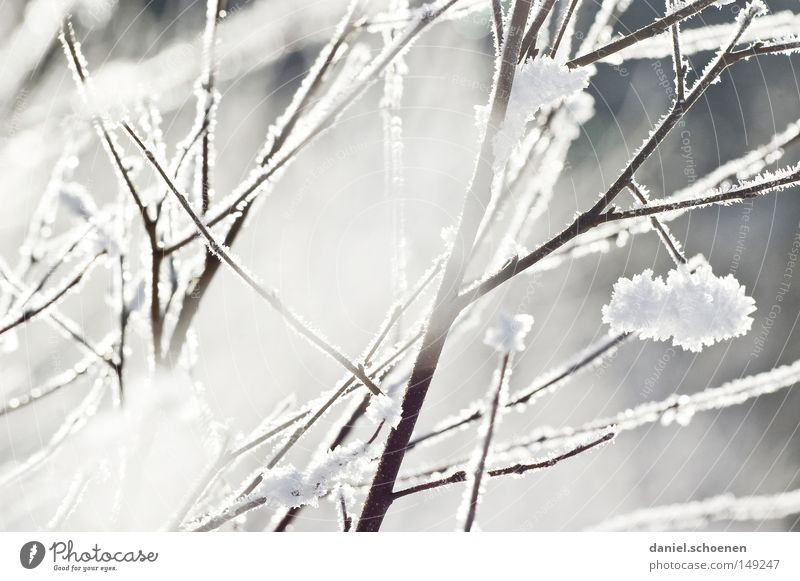 Nature Sky White Winter Cold Snow Bright Background picture Weather Branch Hoar frost Black Forest Meteorology