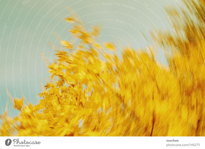 Sky Tree Leaf Yellow Autumn Round Transience Dynamics Seasons Abstract Whirlpool Swirl Whirlwind