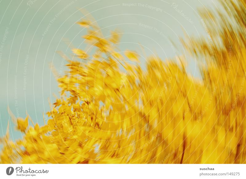 Sky Tree Leaf Yellow Autumn Round Transience Dynamics Seasons Abstract Whirlpool Swirl Whirlwind