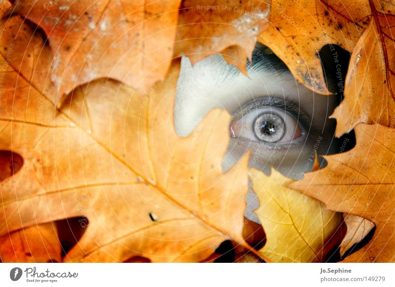 Human being Leaf Eyes Autumn Exceptional Fear Masculine Observe Fear of death Creepy Claustrophobia Whimsical Autumn leaves Bizarre Pallid Horror