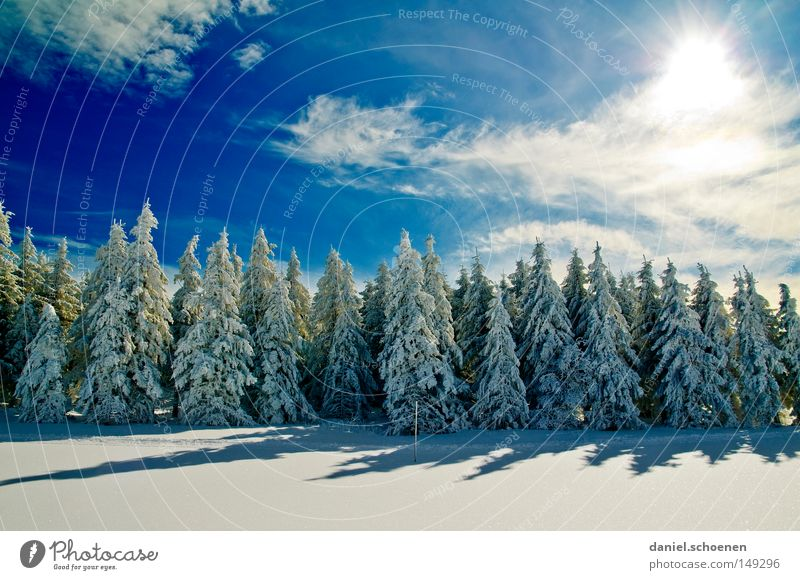 new christmas card 12 Sun Sunbeam Winter Snow Black Forest White Deep snow Hiking Leisure and hobbies Vacation & Travel Background picture Tree Snowscape Nature