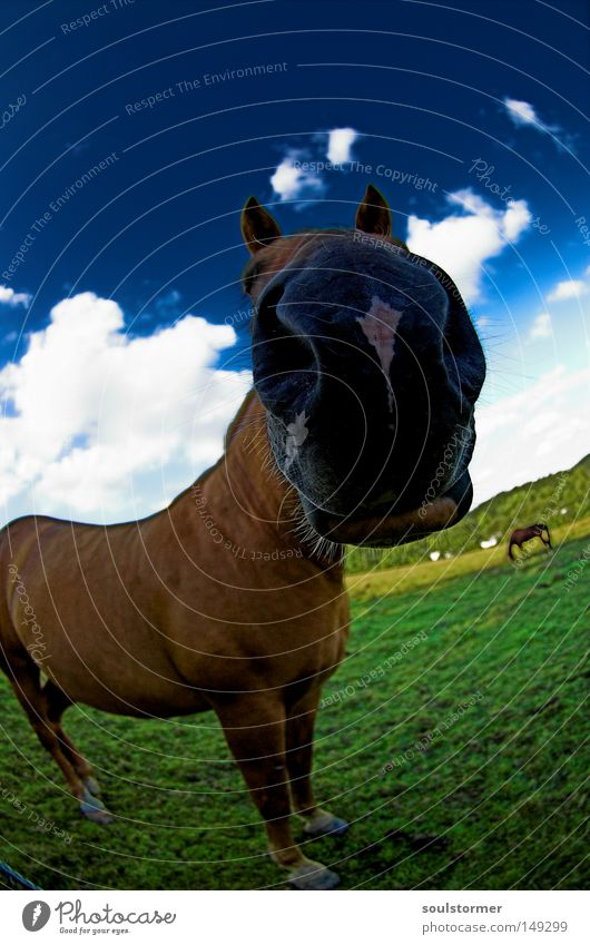 Sky Nature Green Summer Animal Clouds Black Far-off places Meadow Grass 2 Brown Pair of animals Dirty Mouth Island