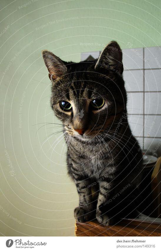 Cat Animal Sweet Cute Pelt Paw Flow Domestic cat