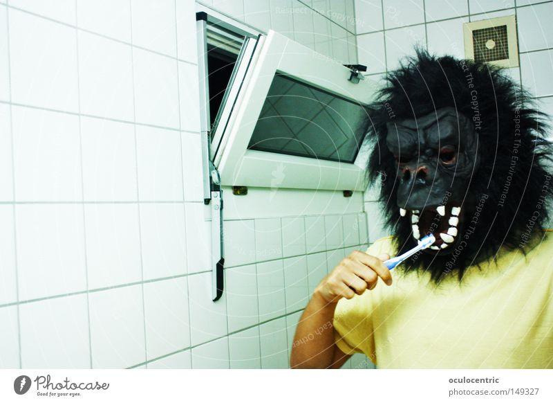 Bathroom Mirror Tile Mammal Self portrait Monkeys Toothbrush