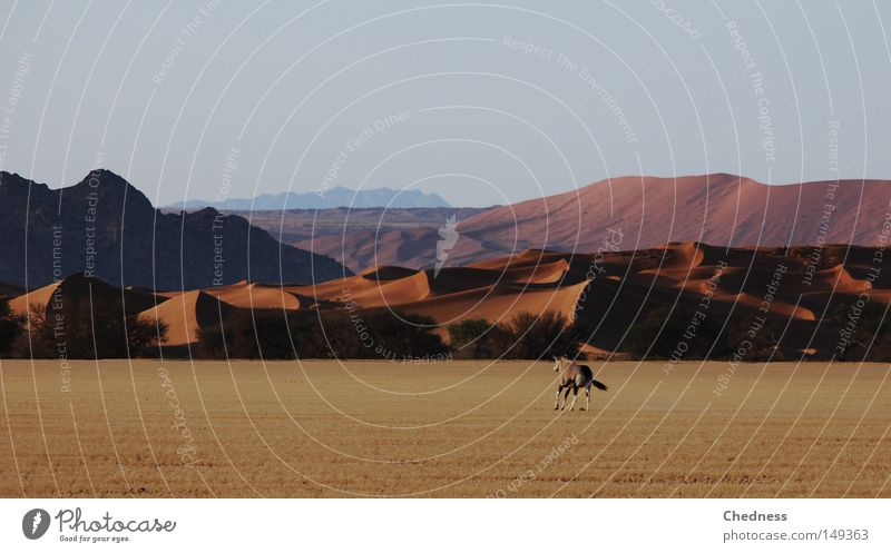 Mountain Freedom Warmth Sand Landscape Speed Open Africa Desert Hot Hill Wild animal Antelope Dry Vension Dune