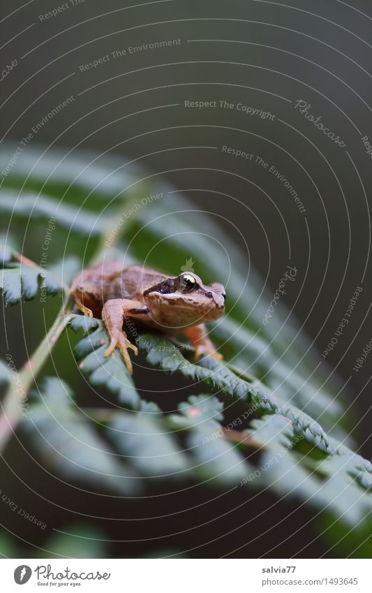 keep the overview Environment Nature Plant Animal Fern Leaf Wild plant Forest Wild animal Frog Grass frog Amphibian 1 Observe Hunting Crawl Wait Small Above