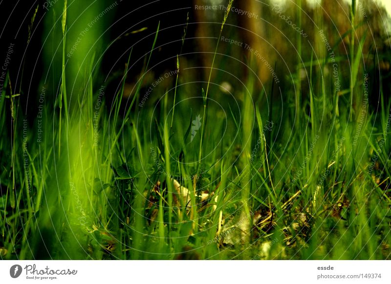 fresh, cheeky, grass-green. Colour photo Exterior shot Shadow Contrast Shallow depth of field Calm Nature Plant Spring Grass Moss Meadow Fresh Large Small
