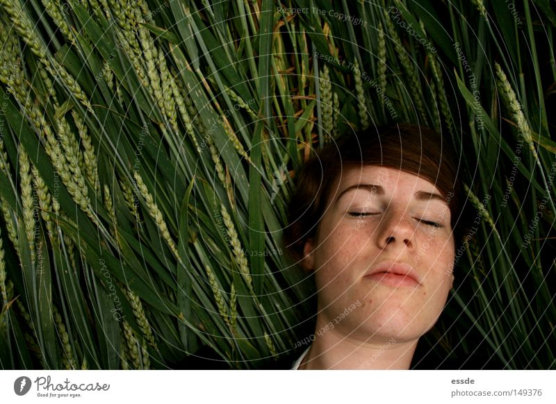 grain-whispered Colour photo Copy Space left Day Shadow Bird's-eye view Grain Contentment Relaxation Woman Adults Nature Field Lie Sleep Trust Peace Wheat