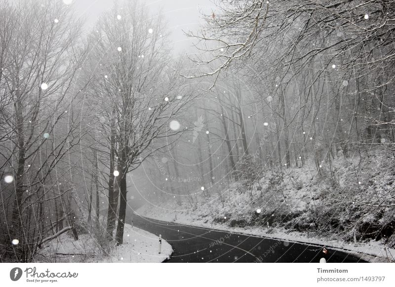 Nature Vacation & Travel Leaf Winter Forest Black Street Natural Gray Snowfall Weather Fog Curve