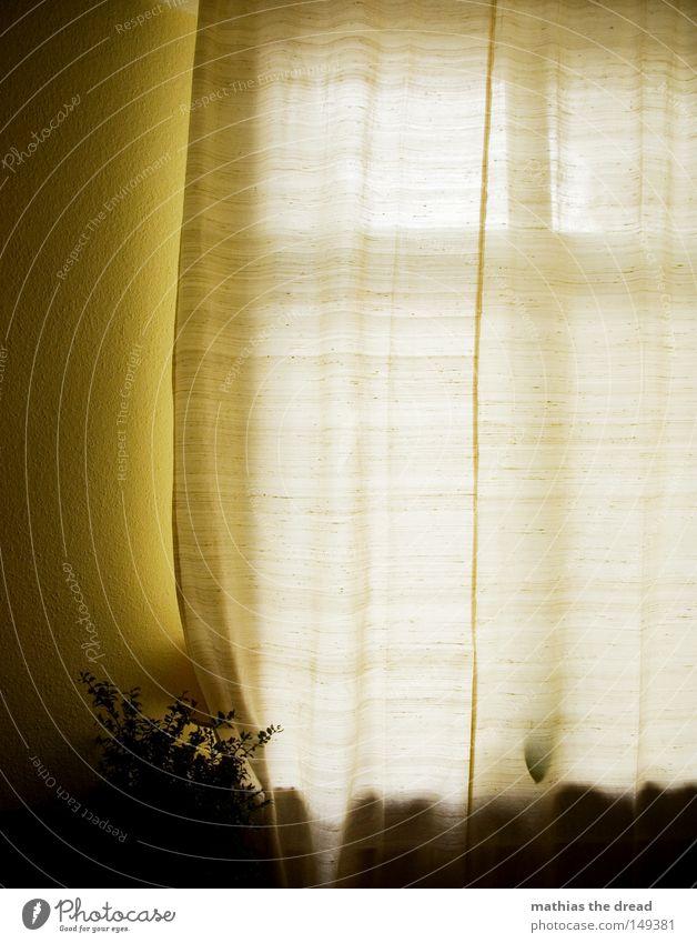 Beautiful Flower Blue Calm Black Loneliness Life Dark Playing Window Warmth Line Bright Room Glittering Flat (apartment)