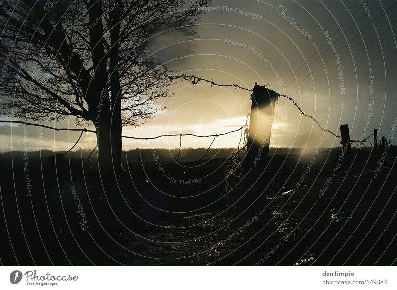 Tree Sun Clouds Dark Wall (barrier) Rain Wet Countries Fence Gale Analog Americas Bad weather Ireland Barbed wire fence Alternating