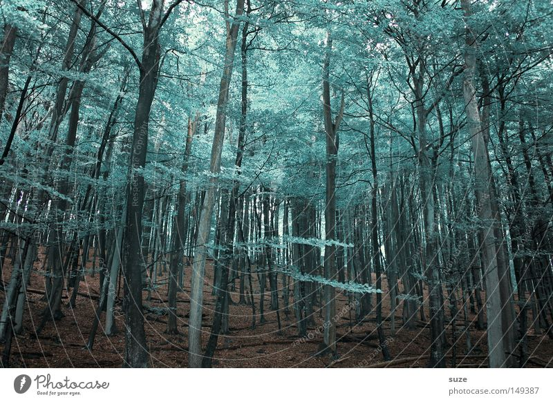 woodland Agriculture Forestry Environment Nature Landscape Elements Earth Climate Tree Leaf Treetop Leaf canopy Growth Exceptional Tall Cold Moody Loneliness