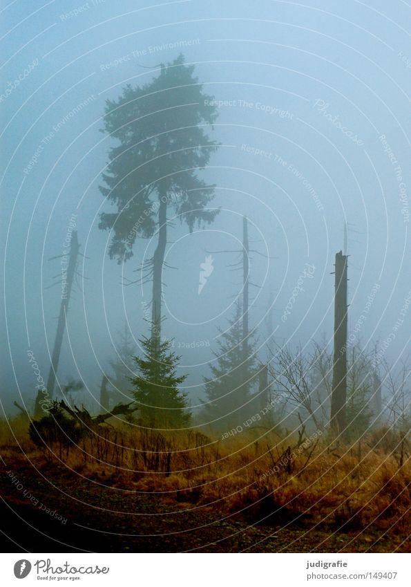 Nature Tree Winter Forest Cold Autumn Mountain Hiking Fog Environment Mystic Haze November Harz