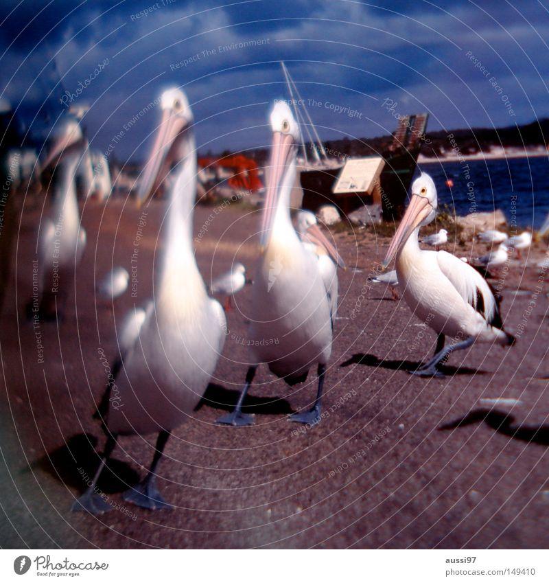 Bird Harbour Fishery Ink Stationery Fountain pen Pelican Writing utensil Wild bird